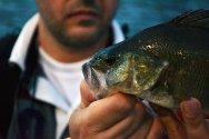 Na zakończenie spaceru niespodzianka. Spotkałem pana, który właśnie złowił rybę. Wprawdzie do jedzenia się nie nadaje, ale na fotografię jak najbardziej.