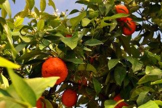 Jeśli nie wiecie jeszcze, dlaczego warto się zakochać w Granadzie, podpowiedź: przez okrągły rok owocują tu drzewka pomarańczowe (zawsze są kwiaty i owoce - dzięki czemu nad miastem unosi się charakterystyczny, przepiękny zapach kwiatów pomarańczy).