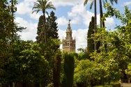 Ogrody pałacowe z widokiem na Giraldę.