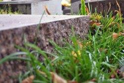 Ukryty w trawie, prosty grób rzeźbiarza, Ossipa Zadkina