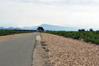 Winnice - w tle Mont Ventoux.